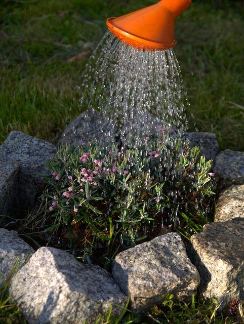 watering-323885_640
