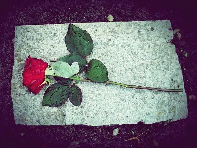 rose-770724_640